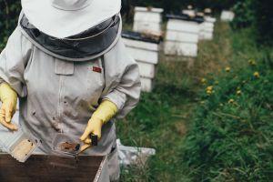 Bienen Rewe